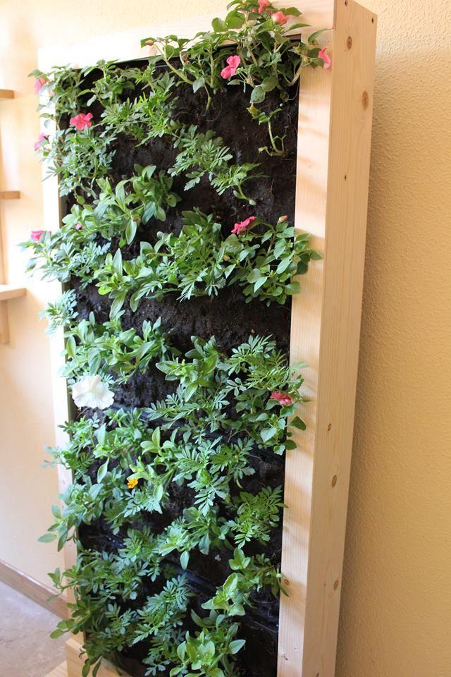 Jardin vertical natural con planta de temporada #jardinvertical #cuadrosvivos #natural #decoraciondeinteriores #leavesdesign