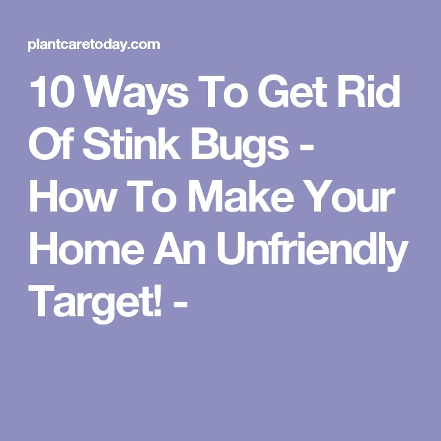 10 Ways To Get Rid Of Stink Bugs - How To Make Your Home An Unfriendly Target! -