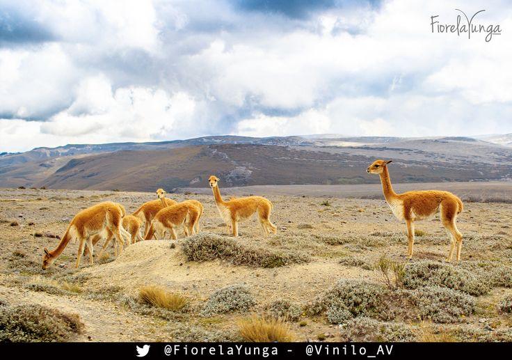 Faldas del Chimborazo