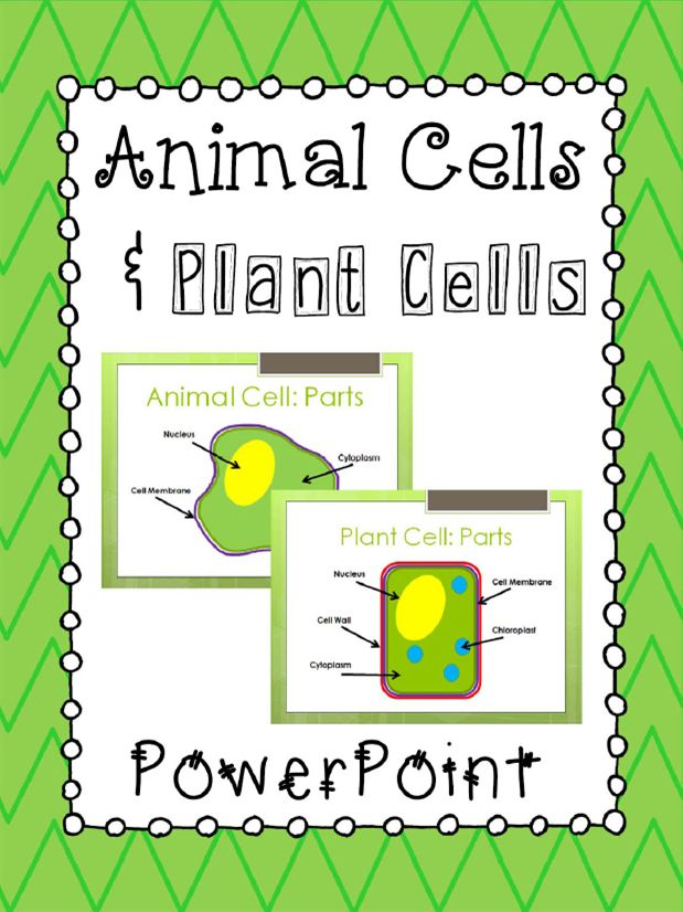 26 best plant and animal cells 5th grade images on pinterest animal cells and plant cells powerpoint presentation editable ccuart Gallery