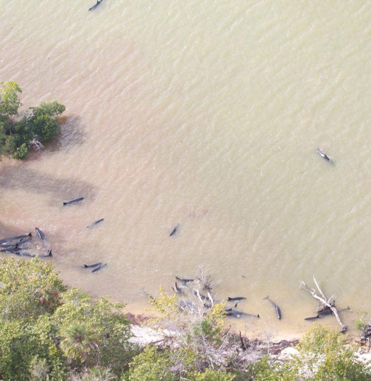 false killer whales everglades national park cover