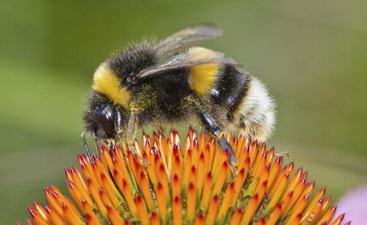 88 besten insekten bilder auf pinterest insekten garten for Zimmerpflanzen kleine fliegen