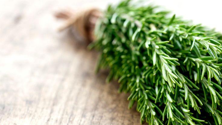 O alecrim (Rosmarinus officinalis) é um arbusto comum na região do Mediterrâneo ocorrendo dos 0 a 1500 m de altitude. Devido ao seu aroma
