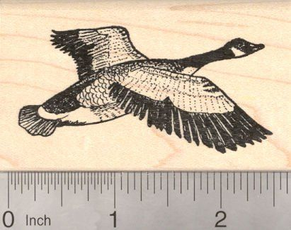 Amazon.com: Canadian Goose Rubber Stamp, Canada, North America Bird: Arts, Crafts & Sewing
