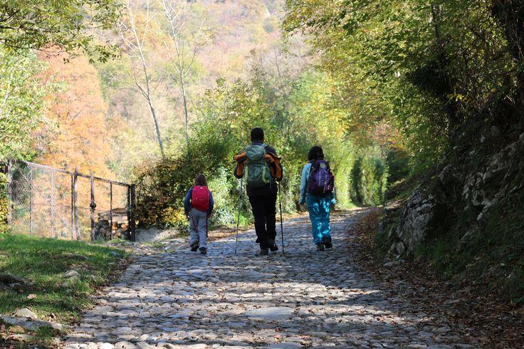 Il sentiero spirito del bosco da Canzo a Terz'Alpe - duepertrefacinque