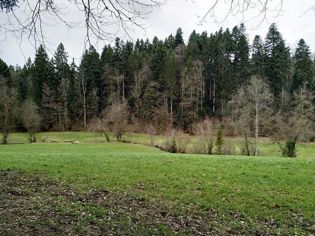 Der erste zarte Blätterhauch an den Laubbaumkronen.  #Naturmomente #Schweiz #photooftheday #magicplaces #kraftorte #switzerland #switzerlandpictures #magicswitzerland #nature #naturelovers #forest #sky