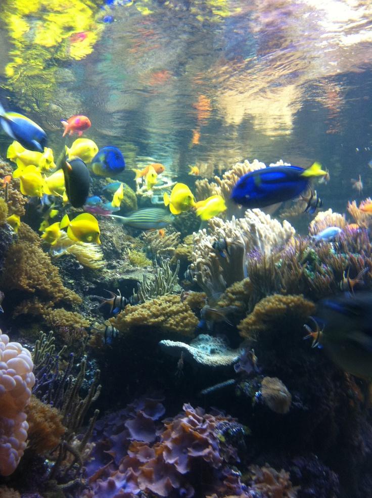 National aquarium in baltimore national aquarium in for Aquarium washington dc