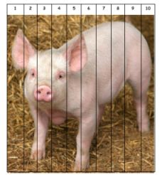 Pig number sequence puzzle to print - good for farm theme or letter P activities