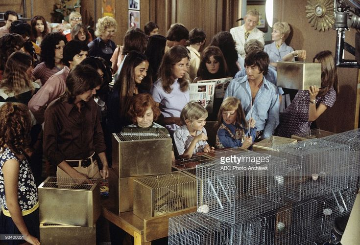 THE PARTRIDGE FAMILY - 'Tale of Two Hamsters' 11/12/71 David Cassidy, Danny Bonaduce, Brian Forster, Suzanne Crough, Extras  (Photo by ABC Photo Archives/ABC via Getty Images)
