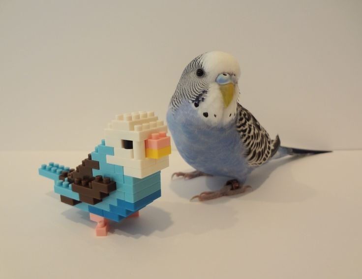 Lego parakeet and parakeet. Too Cute!