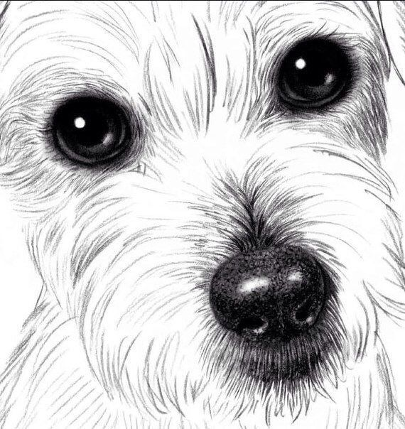 How to draw dogs step by step? Now we will see how to draw a small dog with a pencil in stages, step by step. We will need a pencil and eraser. What a breed I do not know, who knows, please write in the comments, then I will fix the article. … … Continue reading → #DogDrawing