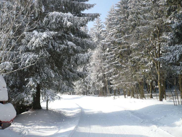 Wunderschöne Wander- und Skistrecken durch den Wald bei Frauenwald...