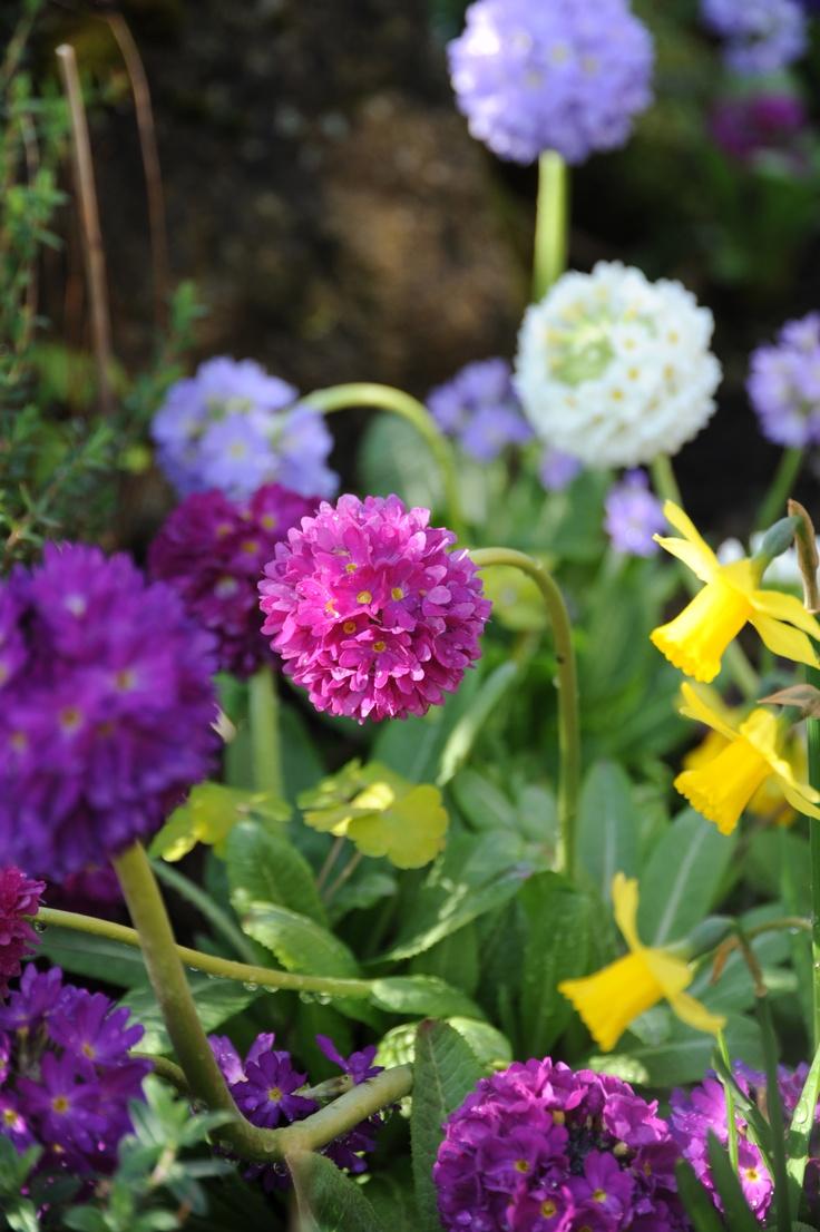Spring in Findhorn...
