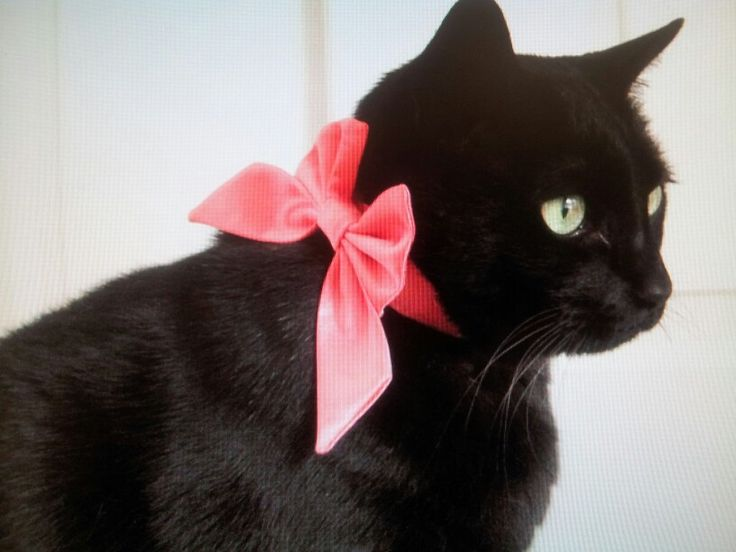 Black Cat With Pink Scary Eyes: 1000+ Ideas About Pink Cat On Pinterest