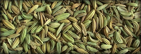 Fennel Seeds in India, Indian Fennel Seeds Suppliers, Fennel Seeds Exporters