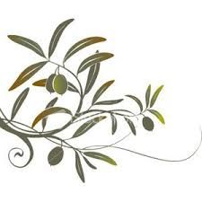 olive oil MOUTAFI