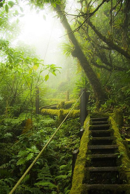 """Mombacho Stairs, The Mombacho Cloud Forest in Central Nicaragua, on the """"Puma"""" hiking trail"""