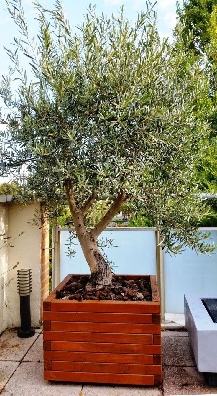 holz k bel terrassen gestaltung mit olivenbaum tuin. Black Bedroom Furniture Sets. Home Design Ideas