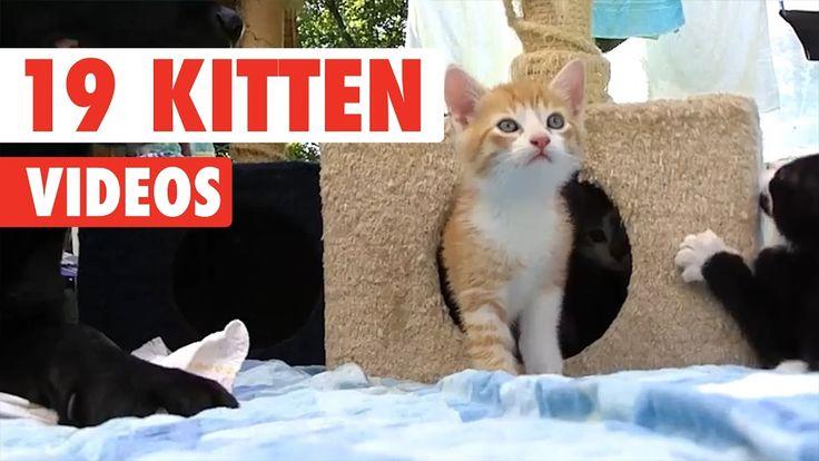 19 Funny Kitten Videos Compilation 2017