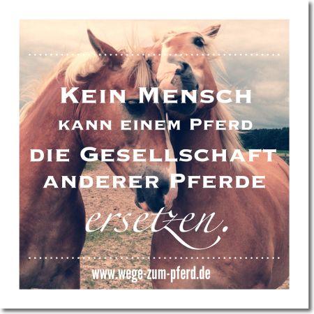 Kein Mensch kann einem Pferd die Gesellschaft anderer Pferde ersetzen. www.wege-zum-pferd.de