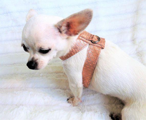 Leather Dog Harness, Choke Free Dog Harness, Dog Harness for Small Dogs, Chihuahua Harness, Yorkie Harness, Maltese Harness, Poodle Harness