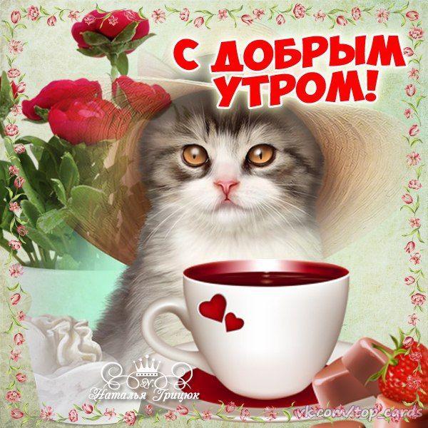 Картинки кошечки с надписями доброе утро, отпуск прикольные анекдоты