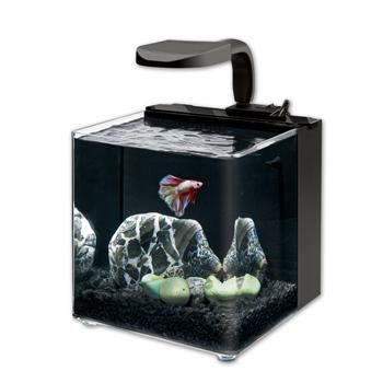 42 best betta fish tank ideas images on pinterest betta for Fish tank cleaning kit