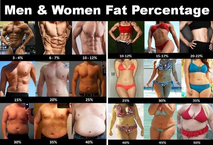 Fat Percentage