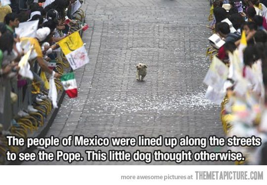 This dog thought otherwise…    totally kills me