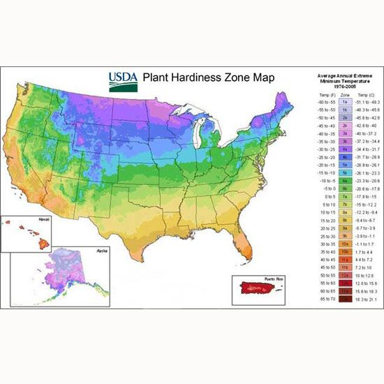 Real-World Winter Gardening Tips From Your Growing Zone - Organic Gardening - MOTHER EARTH NEWS