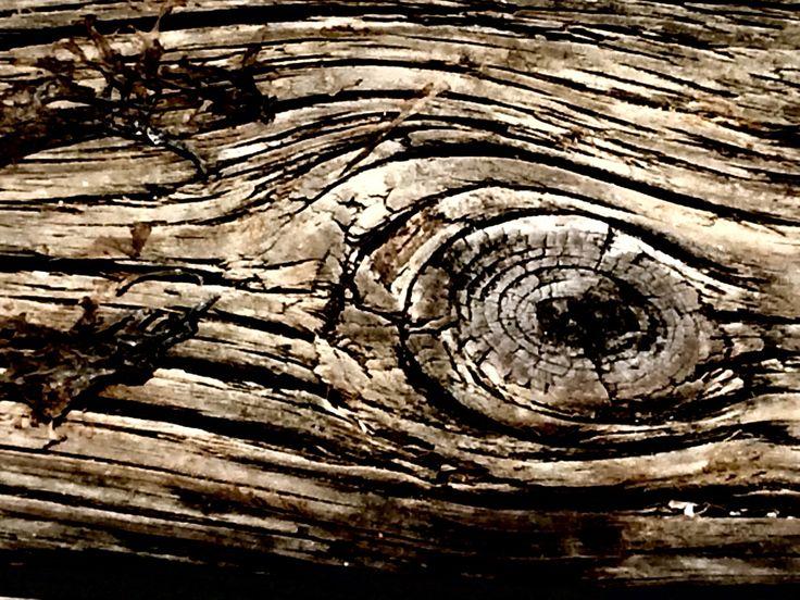Sea wood eye