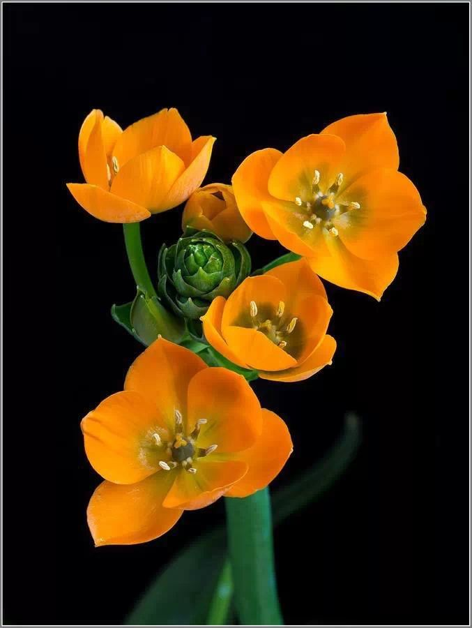 best green flowers images on, Beautiful flower