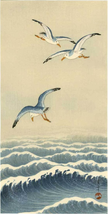 seagulls                                                       …