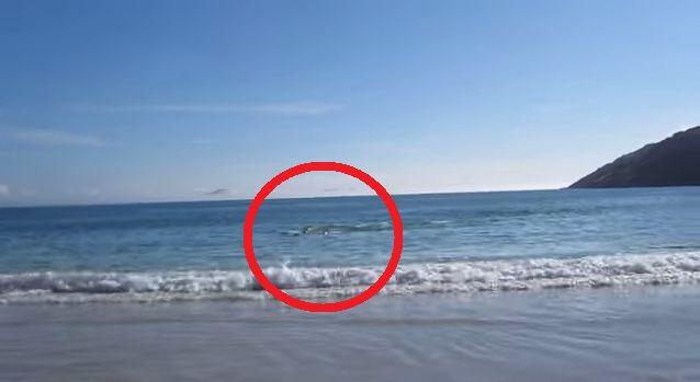 Predstavte si, že stojíte na pláži, a počasie je krásne. Počujete vlny narážajúce proti piesku, slnko Vás príjemne hreje a zrazu počujete čudné zvuky. Pozeráte a vidíte delfíny. Delfíny sú všade. Uviazli.