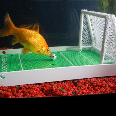 Because all fish should know how to play soccer, especially if they live in Italy.  $20.35 A little pricey, but potential hours of fun! Goldfish Soccer Game | Cool People Shop
