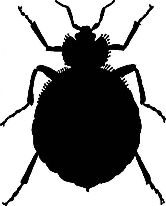Perfect Are Landlords Responsible For Bedbugs?
