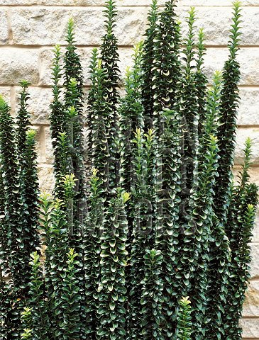 59 best images about evergreens for tight spaces on pinterest trees and shrubs trees and columns - Trees for shade in small spaces concept ...