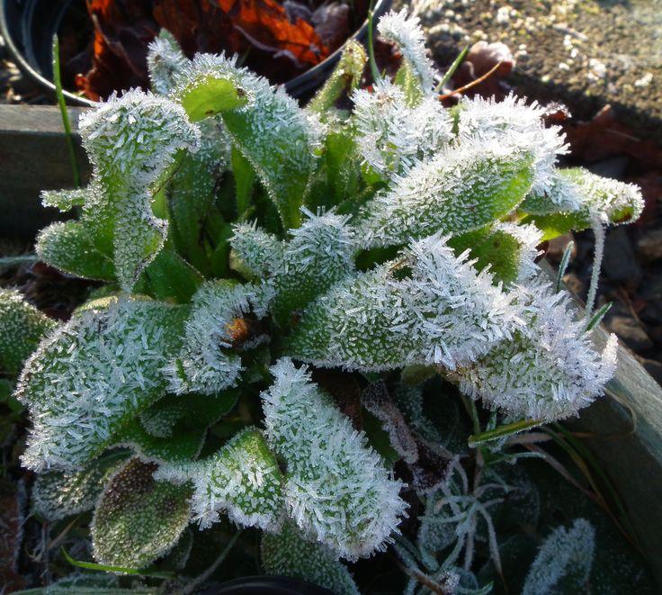First deep frost
