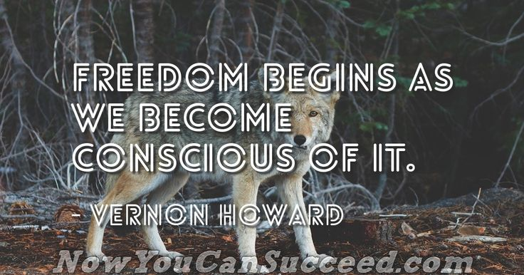 I'm curious... What does Freedom means to you?  👇 Comment Bellow 👇