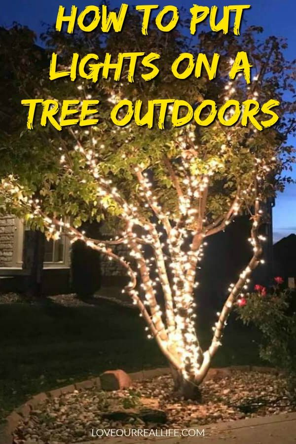 Wrap Lights On An Outdoor Tree In 6 Easy Steps Love Our Real Life Outdoor Trees Outdoor Tree Lighting Outdoor Fairy Lights