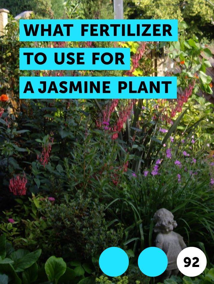 What Fertilizer To Use For A Jasmine Plant Citrus Trees Jasmine