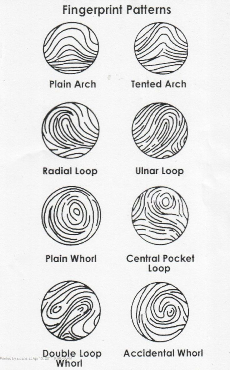 best ideas about different types of different fingerprint pattern facts the different types of patterns in fingerprinting