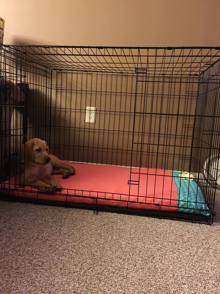 Dog Kennel With Bed