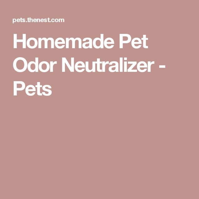 Homemade Pet Odor Neutralizer - Pets