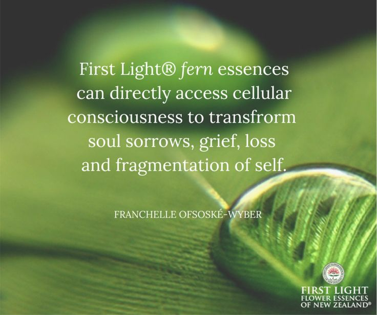 """First Light® fern essences can directly access cellular consciousness to transform soul sorrows, grief, loss and fragmentation of self.   To have a therapeutic treatment blend made up these divine Fern Essences go to www.naturesdesignforlife.com and click on """"Have Kim select"""" asking for all the Fern Essences to be created directly for you."""