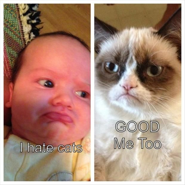 1000+ images about Grumpy Cat on Pinterest | Cats, Grumpy ... Loathe Cat