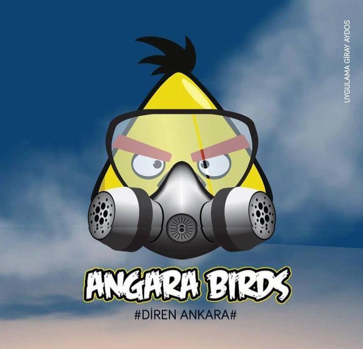 angara-birds-diren-la-angara