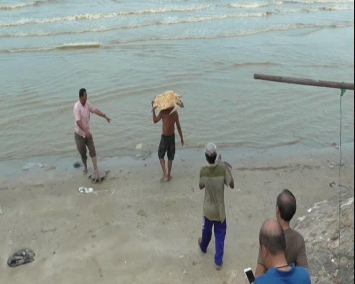 Buang Sial Menjelang Imlek, Umat Tri Dharma Gelar Ritual Lepas Penyu ke Laut