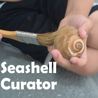 Curate a Seashell Museum: using pretend play to learn about museums