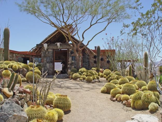 159 best cactus gardens images on Pinterest Landscaping Cacti